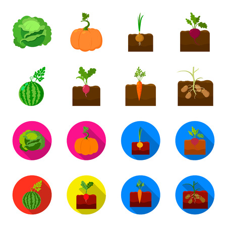 Watermelon, radish, carrots, potatoes. Plant set collection icons in cartoon,flat style vector symbol stock illustration web. Illustration