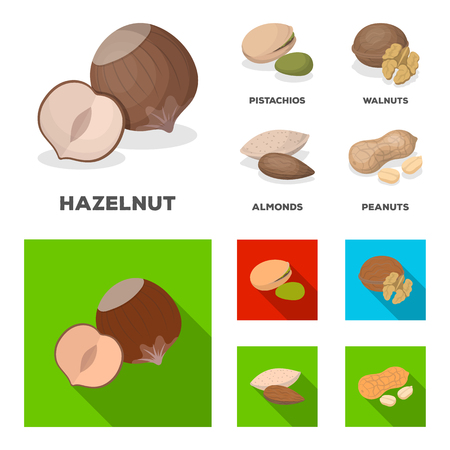 Hazelnut, pistachios, walnut, almonds.Different kinds of nuts set collection icons in cartoon,flat style vector symbol stock illustration .