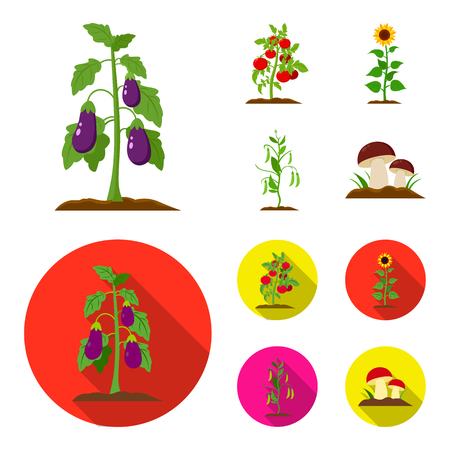 Eggplant, tomato, sunflower and peas.Plant set collection icons in cartoon,flat style vector symbol stock illustration . Illustration