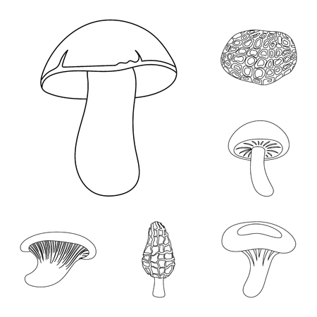 Poisonous and edible mushroom outline icons in set collection for design. Different types of mushrooms vector symbol stock  illustration.
