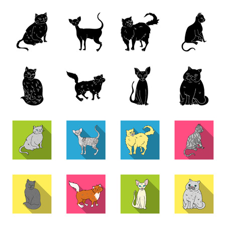 Sphinx, nibelung,norwegian forest cat and other species. Cat breeds set collection icons in black,flet style vector symbol stock illustration web.
