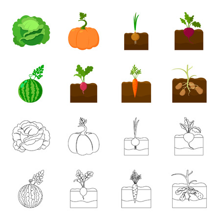 Watermelon, radish, carrots, potatoes. Plant set collection icons in cartoon,outline style vector symbol stock illustration web.