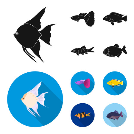 Botia, clown, piranha, cichlid, hummingbird, guppy,Fish set collection icons in black, flat style vector symbol stock illustration web.