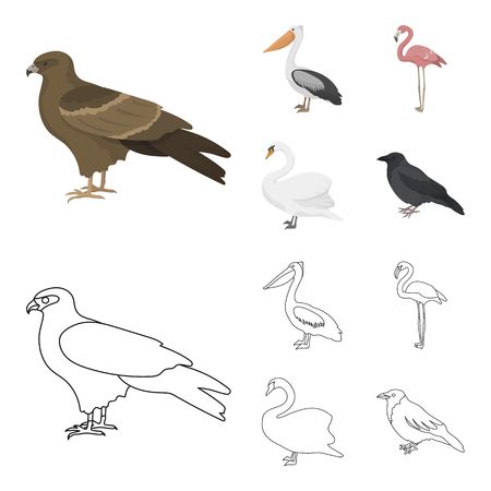 Kite, pelican, flamingo and swan. Birds set collection icons in cartoon,outline style vector symbol stock illustration web. Banco de Imagens - 100735839