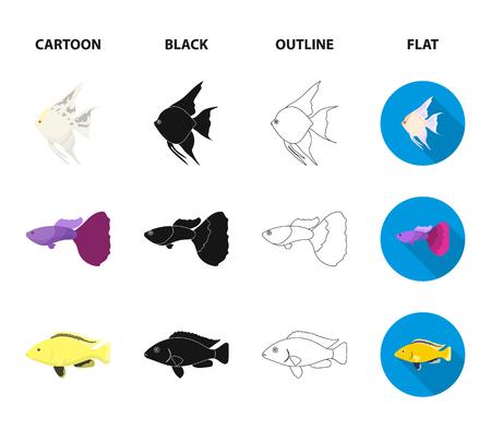 Botia, clown, piranha, cichlid, hummingbird, guppy,Fish set collection icons in cartoon,black,outline,flat style vector symbol stock illustration web. Illustration