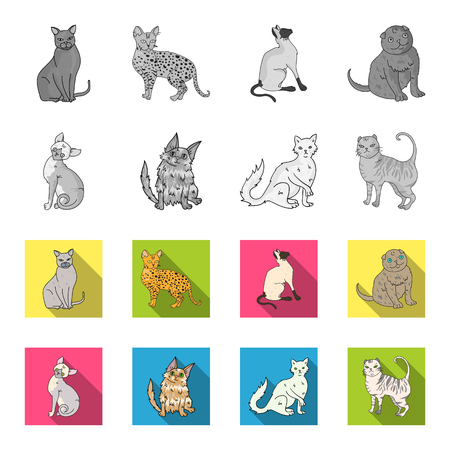 Turkish Angora, British longhair and other species. Cat breeds set collection icons in monochrome,flat style vector symbol stock illustration .