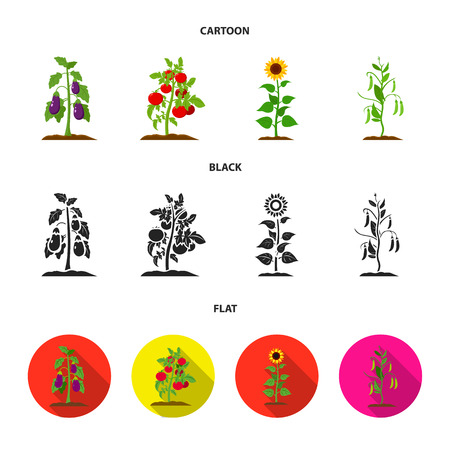 Eggplant, tomato, sunflower and peas.Plant set collection icons in cartoon,black,flat style vector symbol stock illustration web. Vetores