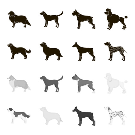 St. Bernard, retriever,doberman, labrador. Dog breeds set collection icons in black,monochrome style vector symbol stock illustration web.