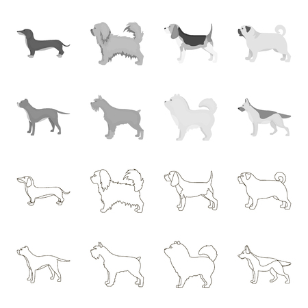 Pit bull, german shepherd, chow chow, schnauzer. Dog breeds set collection icons in outline,monochrome style vector symbol stock illustration .