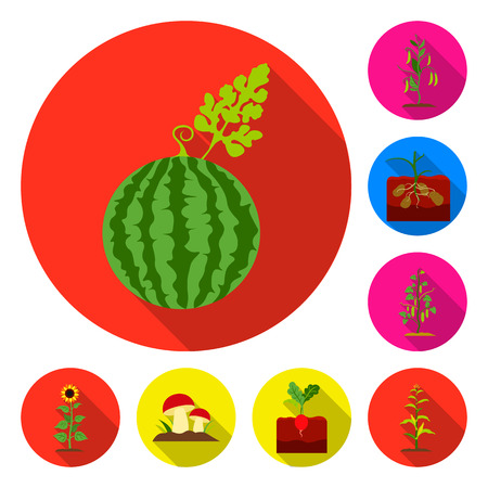 Plant, vegetable flat icons in set collection for design. Garden and harvest vector symbol stock web illustration. Ilustracja