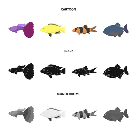 Botia, clown, piranha, cichlid, hummingbird, guppy. Fish set collection icons in cartoon, black, monochrome style vector symbol stock illustration.