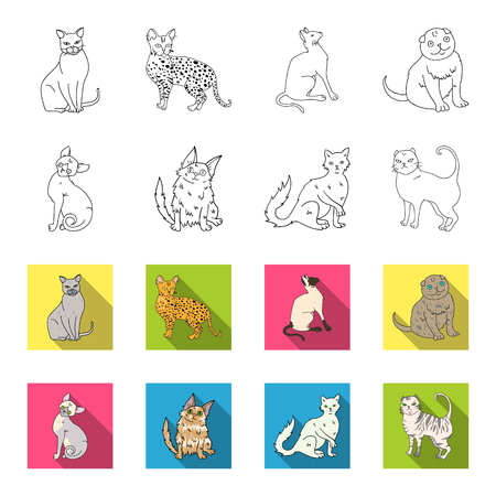 Turkish Angora, British longhair and other species. Cat breeds set collection icons in outline,flat style vector symbol stock illustration web.