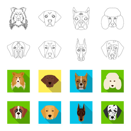 Muzzle of different breeds of dogs.Dog of the breed St. Bernard, golden retriever, Doberman, Dalmatian set collection icons in outline,flat style vector symbol stock illustration web.