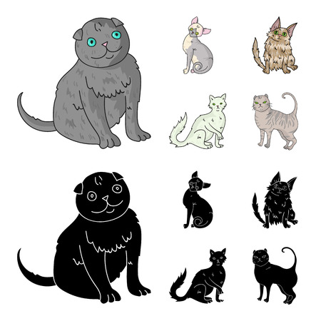 Turkish Angora, British longhair and other species. Cat breeds set collection icons in cartoon,black style vector symbol stock illustration web.