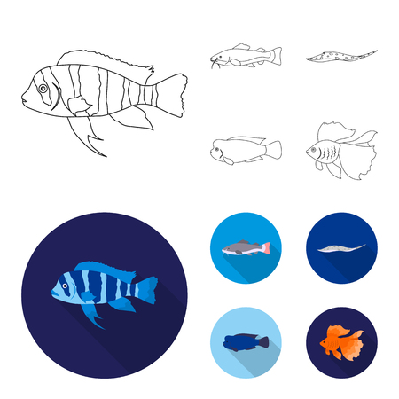 Frontosa, cichlid, phractocephalus hemioliopterus.Fish set collection icons in outline,flat style vector symbol stock illustration web. Illustration