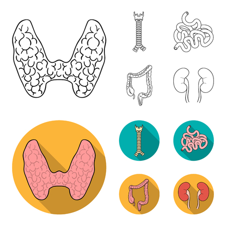 Thyroid gland, spine, small intestine, large intestine. Human organs set collection icons in outline,flat style vector symbol stock illustration web. Zdjęcie Seryjne - 101700293