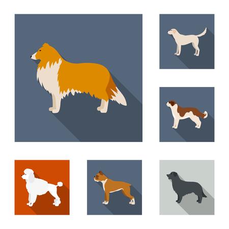 Dog breeds flat icons in set collection for design.Dog pet vector symbol stock web illustration.