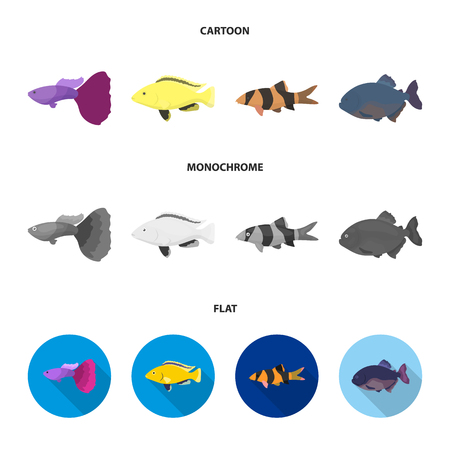 Botia, clown, piranha, cichlid, hummingbird, guppy,Fish set collection icons in cartoon,flat,monochrome style vector symbol stock illustration web.