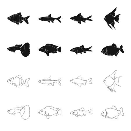 Botia, clown, piranha, cichlidés, colibris, guppy, icônes de collection de jeu de poissons en noir, contour style vecteur symbole stock illustration web.