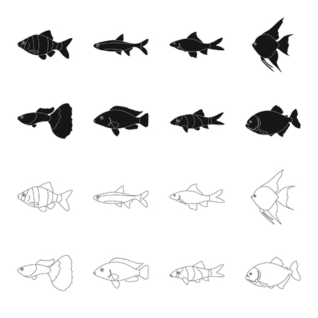 Botia, clown, piranha, cichlid, hummingbird, guppy,Fish set collection icons in black,outline style vector symbol stock illustration web.