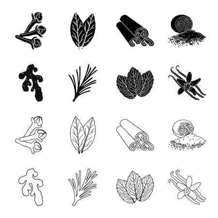 Ginger, rosemary, vanilla, mint.Herbs and spices set collection icons in black,outline style vector symbol stock illustration web. Ilustração