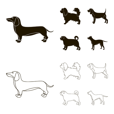 Pikinise, dachshund, pug, peggy. Dog breeds set collection icons in black,outline style vector symbol stock illustration web.