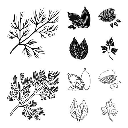 Dill, cocoa beans, basil.Herbs and spices set collection icons in black,outline style vector symbol stock illustration web. Ilustrace