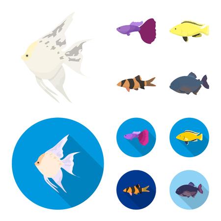Botia, clown, piranha, cichlid, hummingbird, guppy,Fish set collection icons in cartoon,flat style vector symbol stock illustration web. Illustration