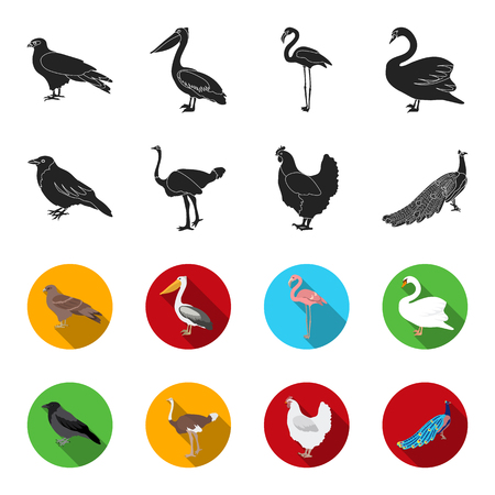 Crow, ostrich, chicken, peacock. Birds set collection icons in black,flet style vector symbol stock illustration . Illustration