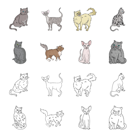Sphinx, nibelung,norwegian forest cat and other species. Cat breeds set collection icons in cartoon,outline style vector symbol stock illustration web.