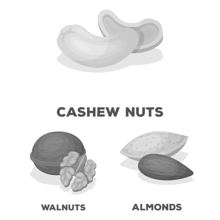 Different kinds of nuts monochrome icons in set collection for design.Nut Food vector symbol stock web illustration.