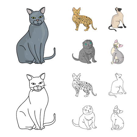 Siamese and other species. Cat breeds set collection icons in cartoon,outline style vector symbol stock illustration web. Illustration