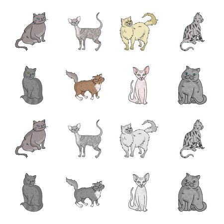 Sphinx, nibelung,norwegian forest cat and other species. Cat breeds set collection icons in cartoon,monochrome style vector symbol stock illustration .
