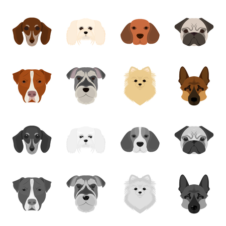 Muzzle of different breeds of dogs.Dog breed Stafford, Spitz, Risenschnauzer, German Shepherd set collection icons in cartoon,monochrome style vector symbol stock illustration . Illustration
