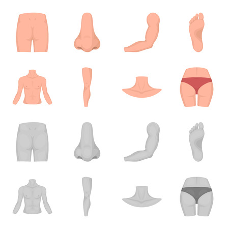 Torso, leg, neck and buttocks. Body parts set collection icons in cartoon,monochrome style vector symbol stock illustration .
