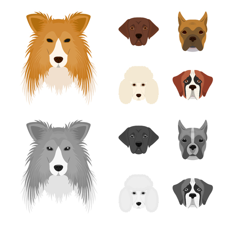 Muzzle of different breeds of dogs.Collie breed dog, lobladore, poodle, boxer set collection icons in cartoon,monochrome style vector symbol stock illustration web.