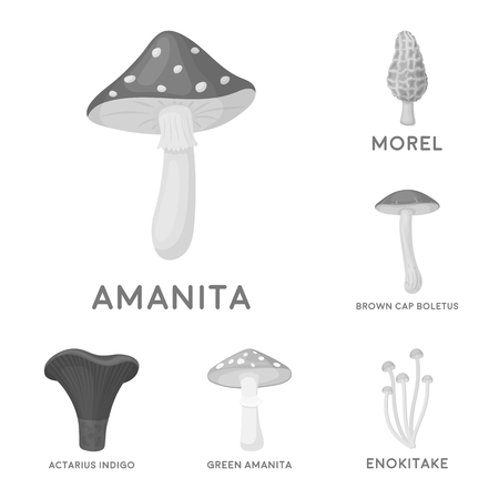 Poisonous and edible mushroom monochrome icons in set collection for design. Different types of mushrooms vector symbol stock  illustration. Vettoriali