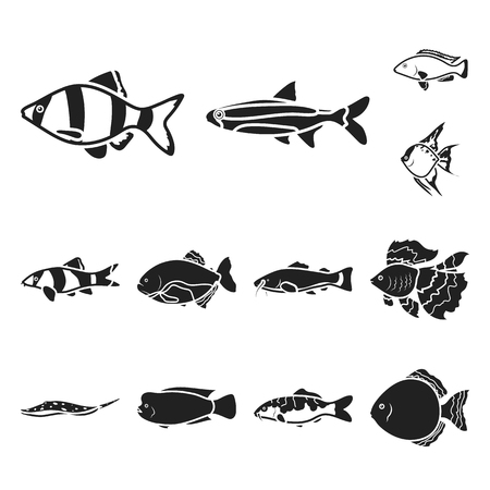 Different types of fish black icons in set collection for design. Marine and aquarium fish vector symbol stock illustration. Ilustracja