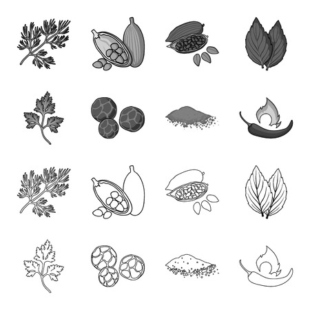 Ptrushka, black pepper, paprika, chili.Herbs and spices set collection icons in outline,monochrome style vector symbol stock illustration web. Illustration