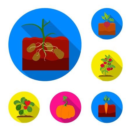 Plant, vegetable flat icons in set collection for design. Garden and harvest vector symbol stock web illustration. Vettoriali