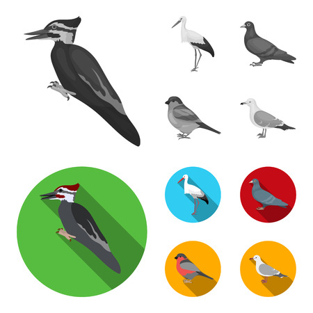 Woodpecker, stork and others. Birds set collection icons in monochrome,flat style vector symbol stock illustration web. Stock Illustratie