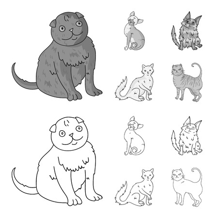 Turkish Angora, British longhair and other species. Cat breeds set collection icons in outline,monochrome style vector symbol stock illustration web.