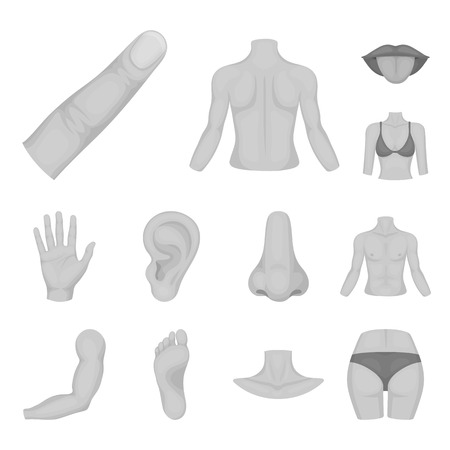 Part of the body, limb monochrome icons in set collection for design. Human anatomy vector symbol stock web illustration.