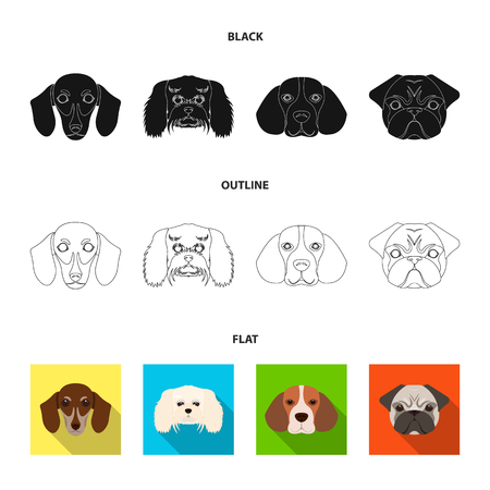 Muzzle of different breeds of dogs.Dog breed of dachshund, lapdog, beagle, pug set collection icons in black,flat,outline style vector symbol stock illustration web.