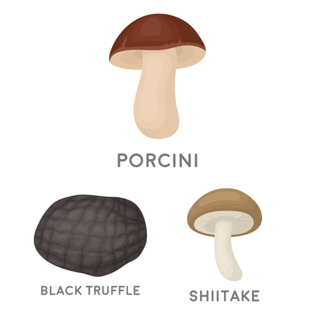 Poisonous and edible mushroom cartoon icons in set collection for design. Different types of mushrooms vector symbol stock web illustration. Illustration