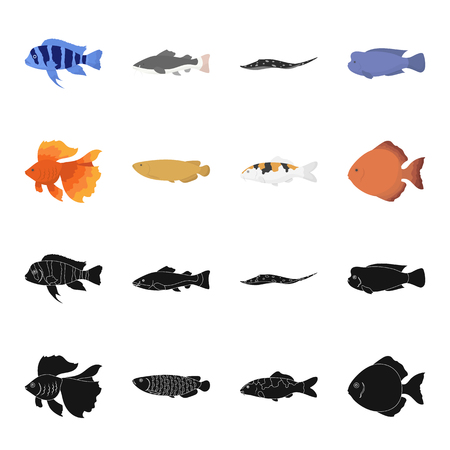 Discus, gold, carp, koi, scleropages, fotmosus.Fish set collection icons in black,cartoon style vector symbol stock illustration web. Illustration
