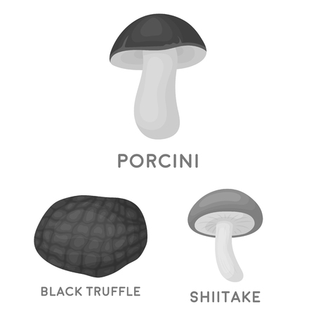 Poisonous and edible mushroom monochrome icons in set collection for design. Different types of mushrooms vector symbol stock  illustration. 向量圖像