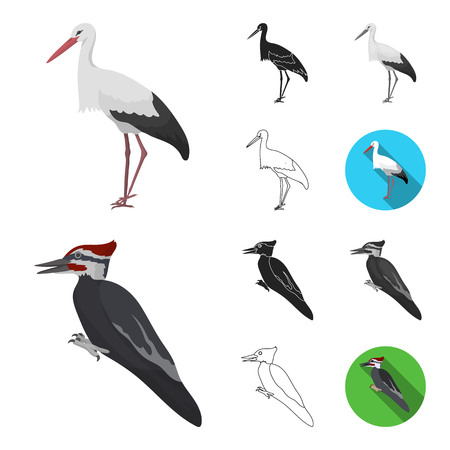 Types of birds cartoon,black,flat,monochrome,outline icons in set collection for design. Home and wild bird vector symbol stock  illustration.