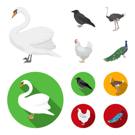 Crow, ostrich, chicken, peacock. Birds set collection icons in cartoon,flat style vector symbol stock illustration . Illustration
