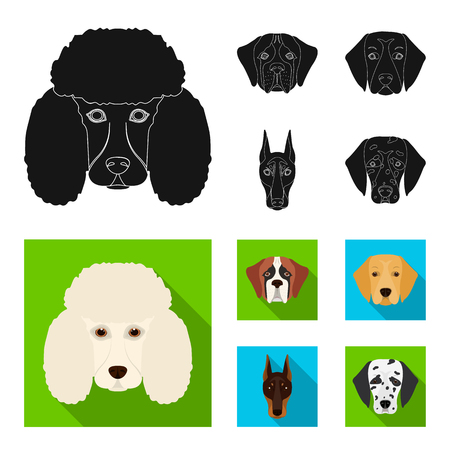 Muzzle of different breeds of dogs.Dog of the breed St. Bernard, golden retriever, Doberman, Dalmatian set collection icons in black, flat style vector symbol stock illustration web.
